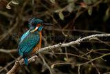 Kingfisher 0945