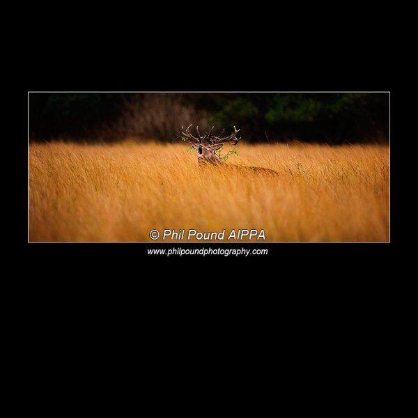 Winner Best Single Image, IPPA Wildlife Category 2014.