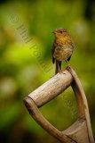 Robin 1042