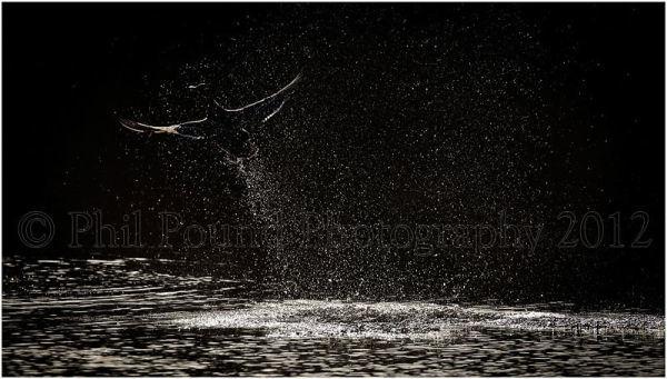 Winner Best single Image, IPPA Wildlife Category 2012