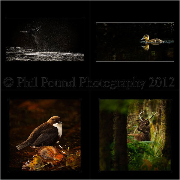 Winner Wildlife Portfolio category IPPA 2012.