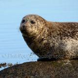 Seal 1790