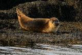 Seal cub 2637