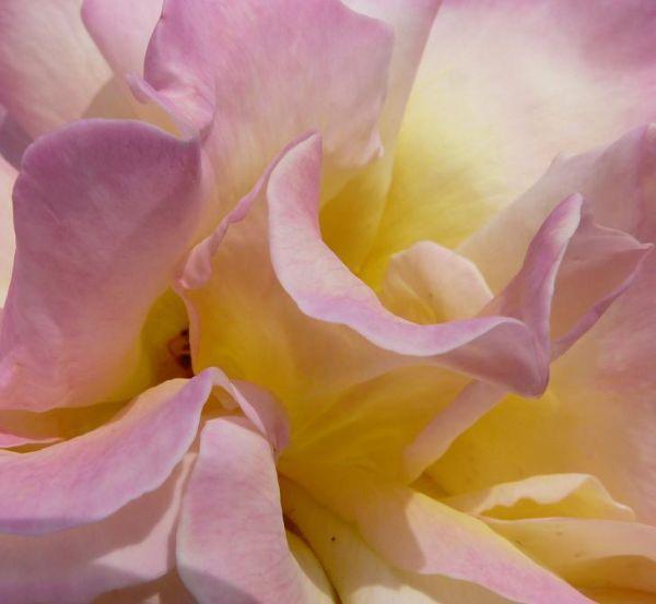 Flower Close Up (1)