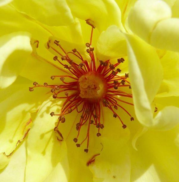 Flower Close Up (2)