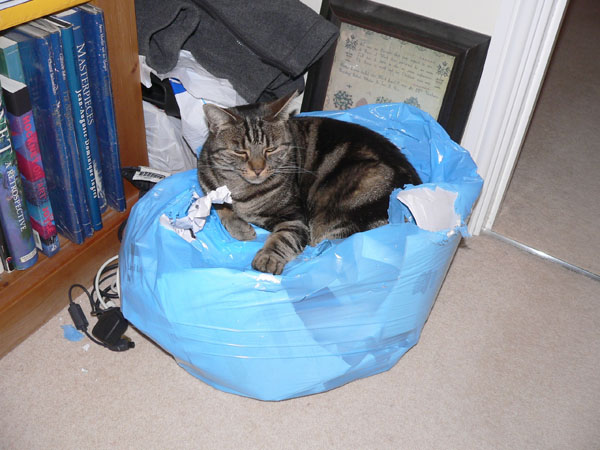 Suzie guarding the waste
