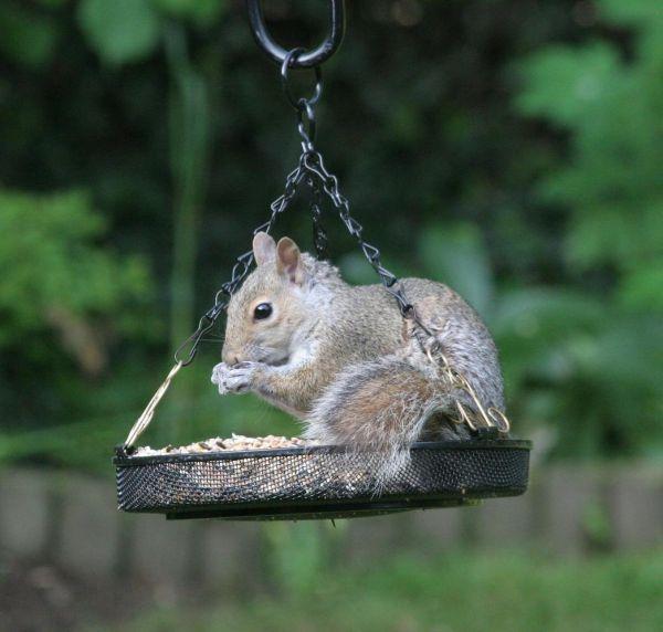 Swinging Seed