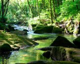 Gorgeous green Golitha Falls, Cornwall.