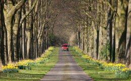 Daffodil Avenue