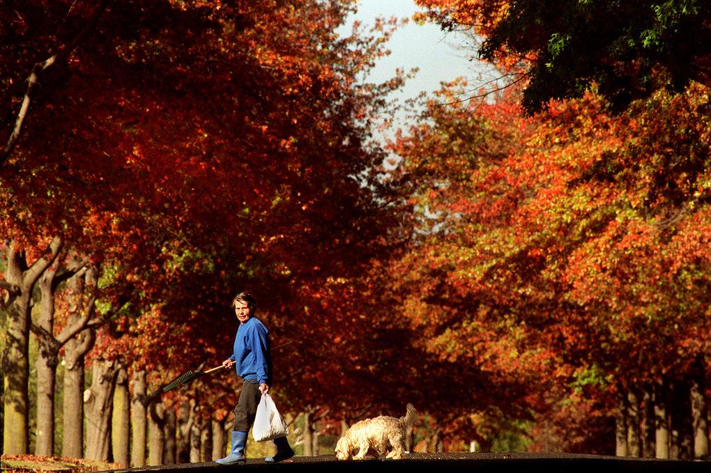 Autumn, my neighborhood