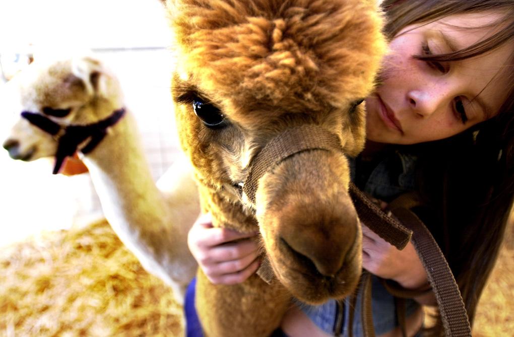 Canberra Show, Llama girl