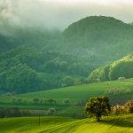 Morning in Jura Mountains