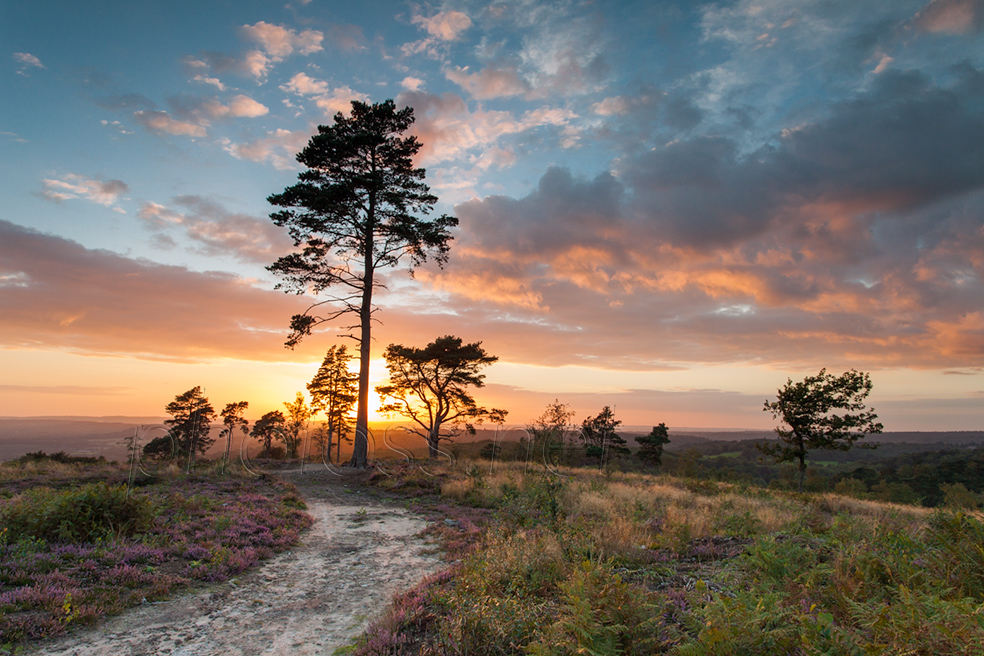 Sunset at Blackdown in West Sussex
