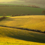 December morning on the South Downs near Brighton