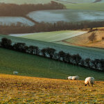 Winter morning on the South Downs in East Sussex