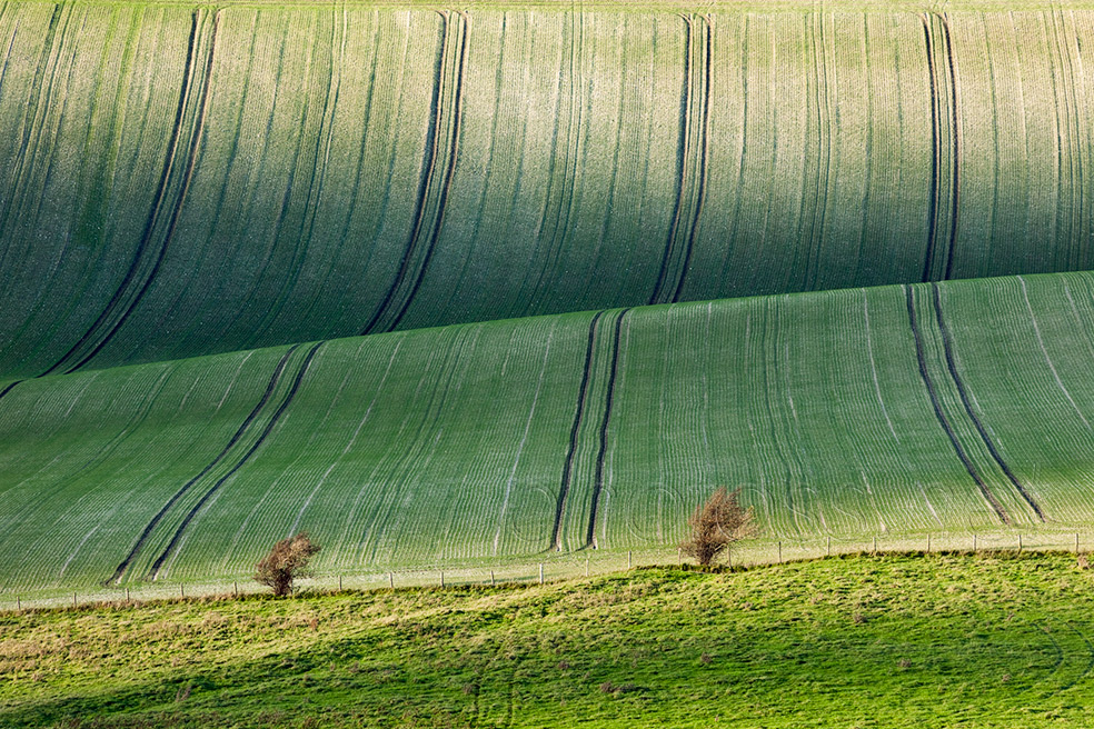 Autumn on the South Downs in East Sussex