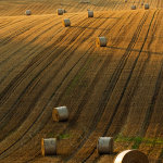 Straw bales on the South Downs in summer
