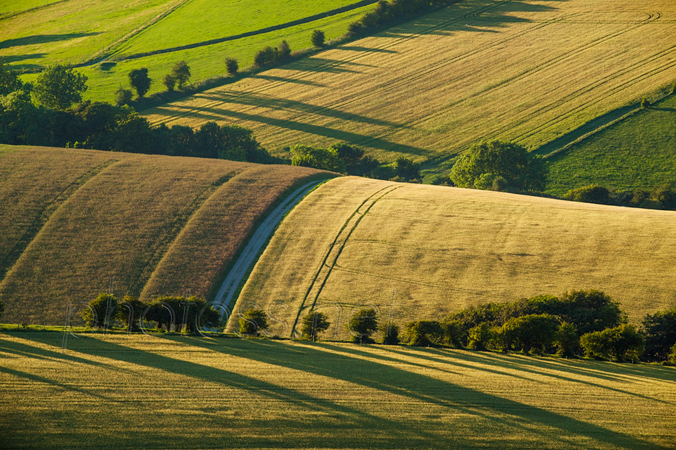 Summer evening on the South Downs near Brighton
