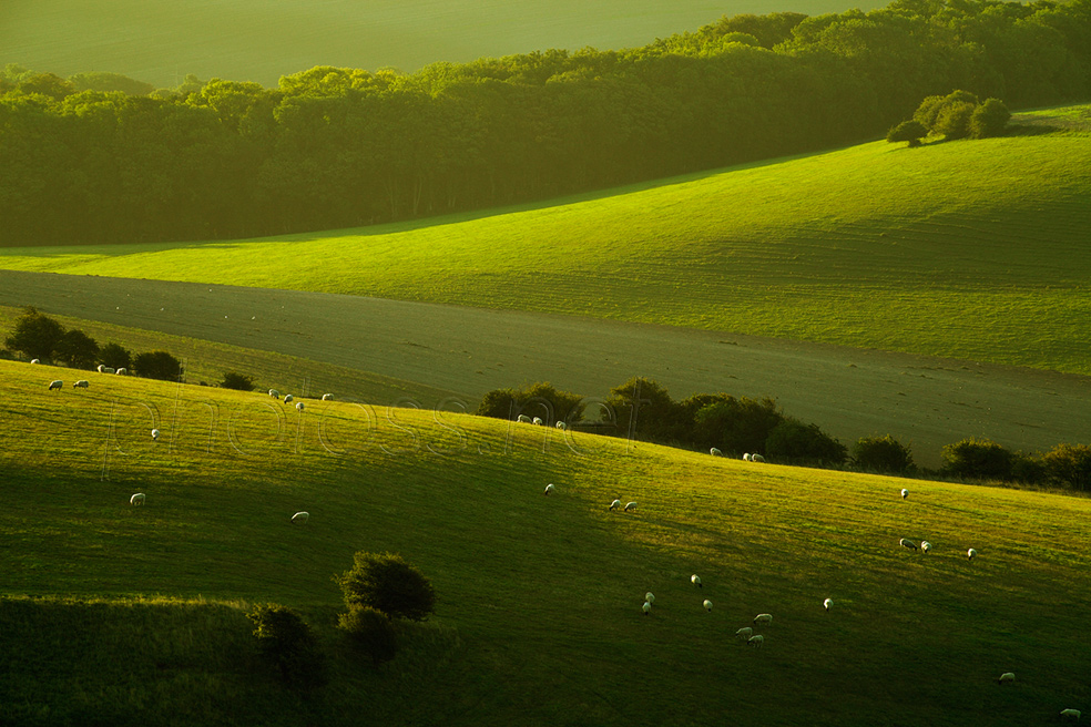 September morning on the South Downs in Sussex