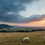Late summer evening on the South Downs
