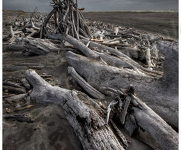 Driftwood New Zealand