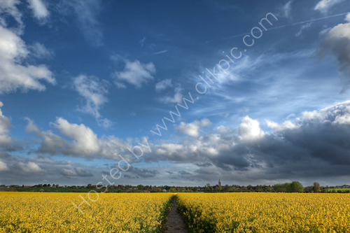 Ash Village viewed across a field of rapeseed