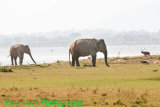 Elephants with Spotted Deer
