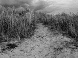 Climping Sand Dunes