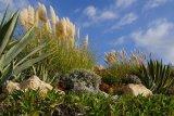 Grasses......