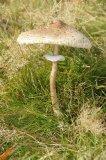 Mushroom or Toadstool?