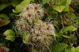 Interesting plant?