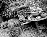 Table, chair and plants