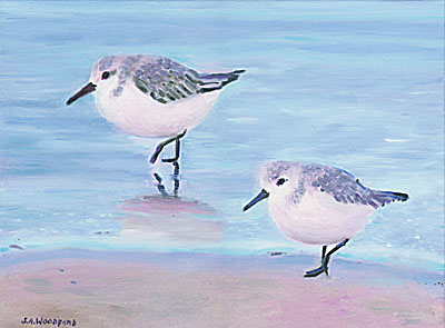 Two Sanderlings
