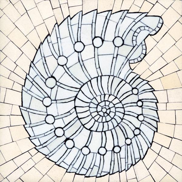 Ammonite II