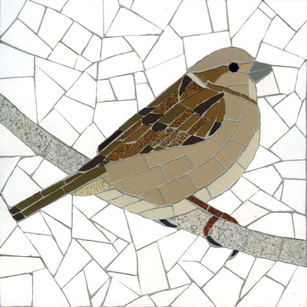 House Sparrow (Female) 4
