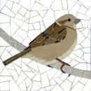Sparrow (Female)