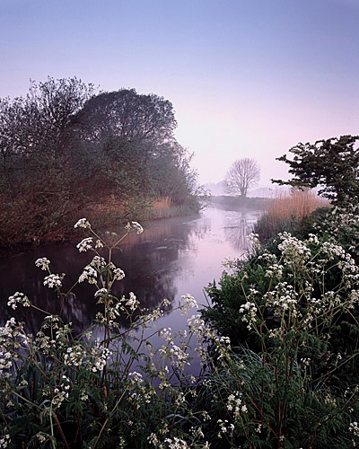 Spring Mist on the River Frome