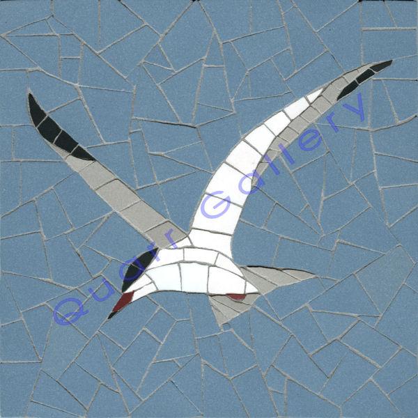 Tern (Common)