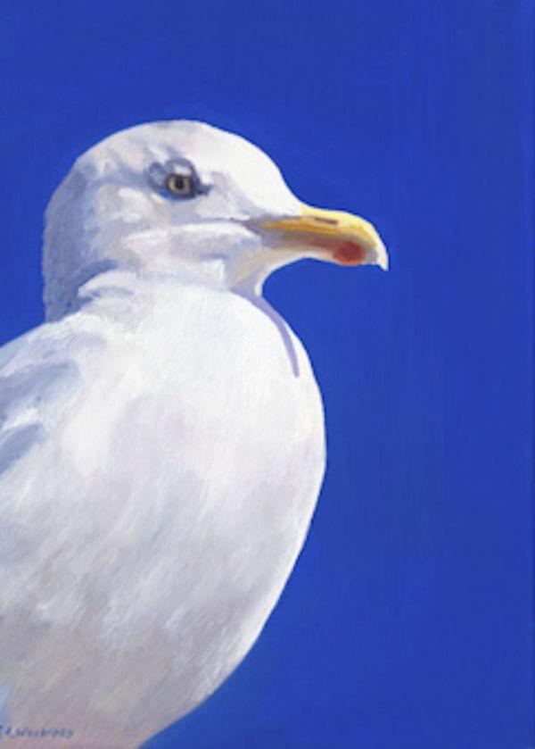 Blue Gull