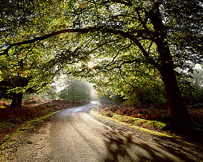 An Early Autumn Morning, Bolderwood