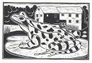 Frog, Sturminster Newton