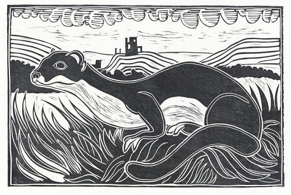 Stoat, Corfe Castle