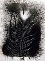 Peacock Feather. PHOTOGRAM.