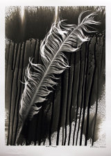 Eagle Feather. PHOTOGRAM.
