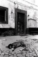 Sleeping Dog, Portugal.