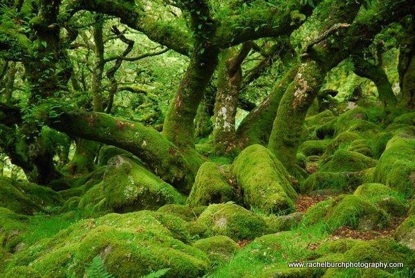 Wistmans Wood Dartmoor