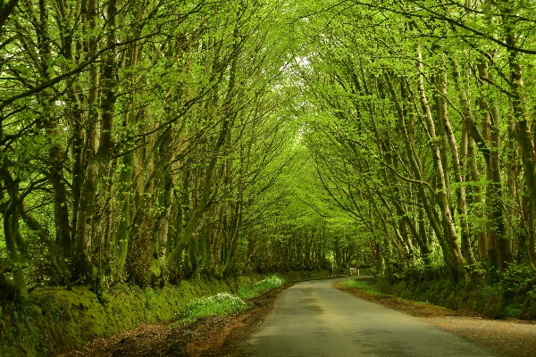 Lane near Brentor, May 2018