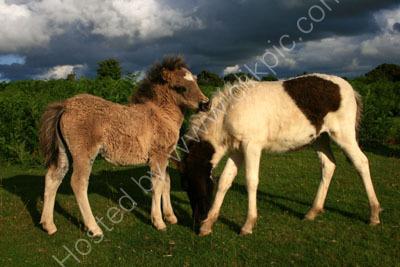 Ponies On Plasterdown