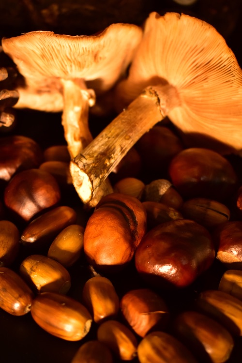 Fungi and conkers still life