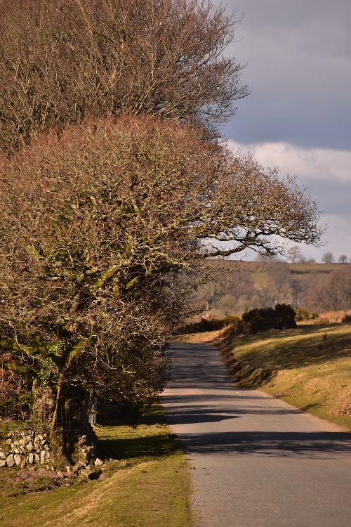 Lane near Brentor March 2018